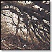 HUSH ARBORS-Under Bent Limb Trees